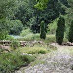 am Botanischen Garten Chemnitz, Dirk Liesch [CC BY 4.0 (https://creativecommons.org/licenses/by/4.0)]
