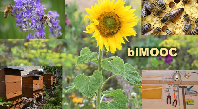 biMOOC – Projekt durch Chemnitzer Initiatoren