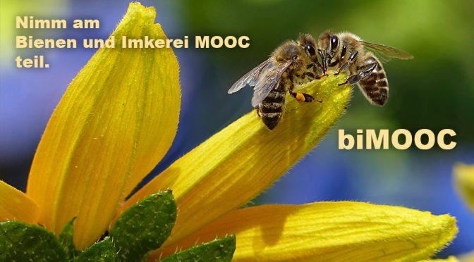 Bienen, Imkerei, Blühflächen und Umweltschutz