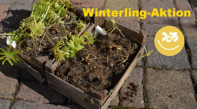 Winterling Blühflächen – Kulturhauptstadt 2025